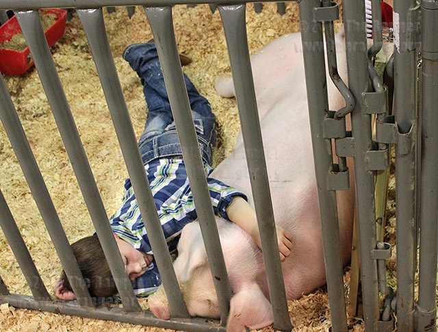 66th annual San Antonio Stock Show & Rodeo