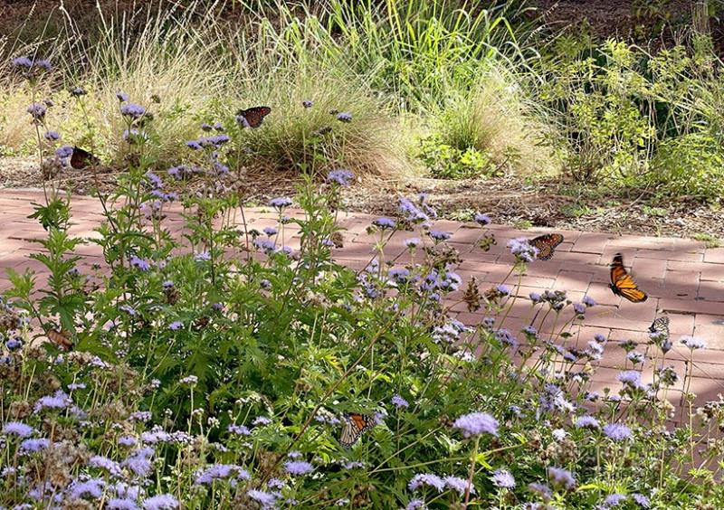 Eco Centro gardens
