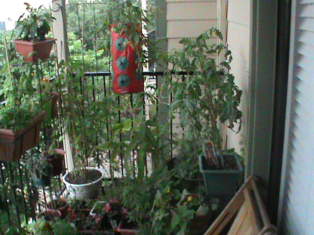The author's garden on her apartment patio Mandi Flores