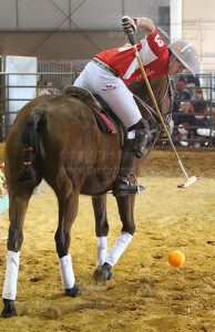 Polo player Quique Garcia, 14, knocks the ball into the air while riding pony Teapot Saturday in the Expo Hall. Garcia has been playing polo for four years and riding since he was 3. He is the youngest polo player of the San Antonio Polo Club. Photo by David Guel