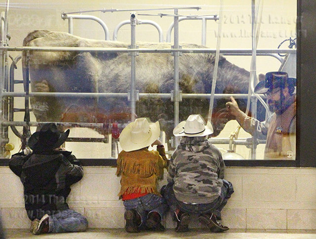 Mobile Dairy Instructor Cody Lightfoot and Cow 16, demonstrate to curious children the milking process Monday in the Dairy Center sponsored by H-E-B. Lightfoot is a member of the Southwest Dairy Farmers, who travel across the Southwest demonstrating the milking process to elementary age children. Photo by Catharine Trevino
