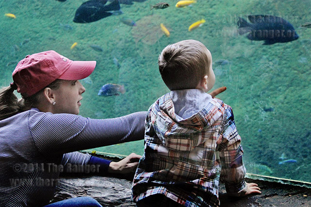 Dava McCarthy and son Ely, 2, look at fish in the Africa Live aquarium at the San Antonio Zoo March 7 to celebrate Zootennial. McCarthy said this is the first time they have visited the zoo and they planned to ride the new carousel later that day. A total of $8 million was spent for the Zootennial, including the carousel and an upscale restaurant. Read the story at theranger.org. Photo by Riley Stephens