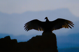 """""""The Keeper"""" is one of the photos in lab technician Mark Magavern's exhibit, """"Out in the Wild: a Texas Portfolio."""""""