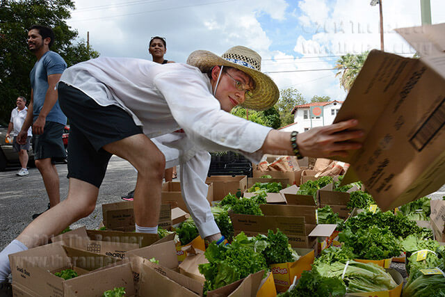 Art sophomore Patrick Hawbecker sorts organic lettuce donated by the San Antonio Food Bank Sept. 3 at the Phi Theta Kappa mobile food pantry in Lot 1. The food bank donated 5,000 pounds of food. The mobile food pantry will return to campus Sept. 30.  Neven Jones
