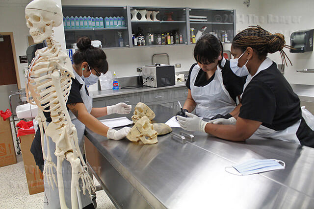 Mortuary science sophomores Stephanie Caranza, Zulcoralis Rodriguez and Andrea Rogers examine a pair of human skulls in their human anatomy lab Oct. 7 in Nail.  Photo by Daniel Arguelles