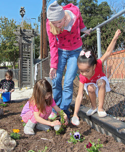 Mackenzie Boeckmann, early childhood studies sophomore and Always Building Children's Development member, oversees 4-year-olds Emilia Chapa and Abigail Esparza watering marigolds and pansies in a garden Feb. 13 between the early childhood studies building and playground. Boeckmann wants to reach 14 volunteer hours in TECA 1311, Educating Young Children.  Photo by E. David Guel