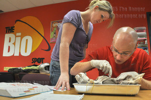 Staff Sgt. Jenny Krause and Capt. Andrew Kennedy of Fort Sam Houston dissect a pig November 2010 for Human Anatomy and Physiology 2 in the BioSpot lab in Room 305 of Chance.  File photo