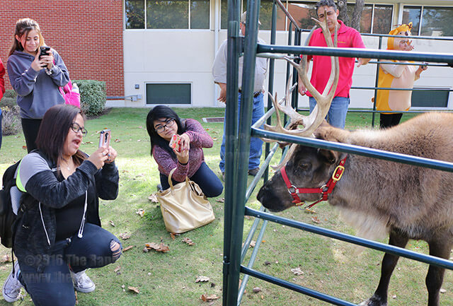 "The office of student life and the Campus Activities Board brought a reindeer Dec. 1 to the mall to bring holiday cheer and relieve stress before finals week. Joy, the reindeer, is 4 years old and lives on the farm at Zoomagination, an organization that educates people about mammals, reptiles, birds and insects. ""It was cool to see a real life reindeer and I loved it,"" criminal justice freshman Adriana Arispe said after taking a photo of Joy. ""I think it gets everyone in the Christmas spirit.""  Photo by Brianna Rodrigue"