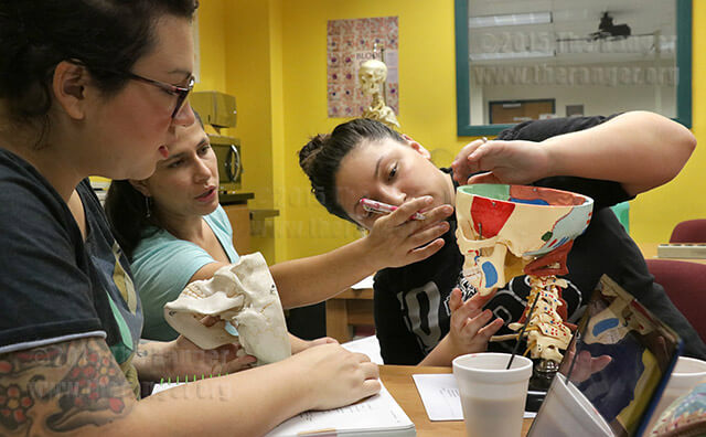 Pre-nursing freshman Jennifer Moreno, and pre-nursing sophomores Jessica Woodard and Cassandra Canter study a human skull model Wednesday in the BioSpot in Room 350 of Chance. Photo by Daniel Carde