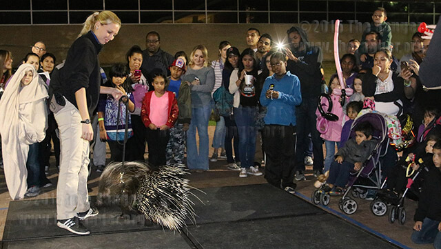 Zoomagination animal trainer Lauren Inderbitzin shows off Sahra, the porcupine, to the crowd at SACtacular Nov. 6 in the mall area. Zoomagination hosted a live animal show every hour exhibiting exotic animals which included a snake, tarantula, and a sloth. Photo by Danielle Kelly