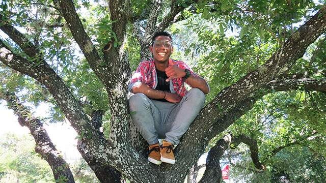 English sophomore Miguel Alcorn. poses in a tree on campus  photo by Valrie Champion